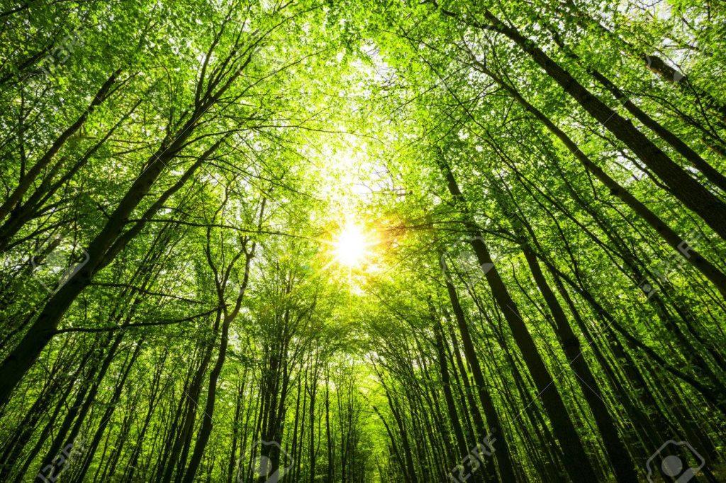 Environmental Modifications By Air Air pollution
